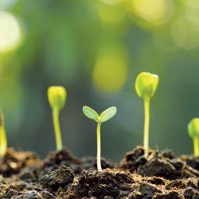 Energia prírody ako celku stále narastá – od okamihu zasadenia energia rastliny rastie. (zdroj: iStock.com/amenic181)
