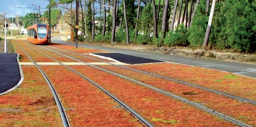Ukážka vegetačného povrchu električkových tratí spovrchom tvoreným rozchodníkom