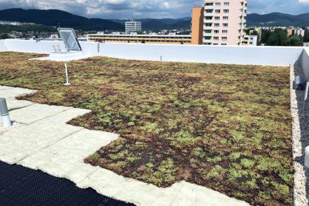 Na mPVC fóliu sa ukladali jednotlivé vrstvy systému vegetačnej strechy.