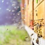 úľ, včely