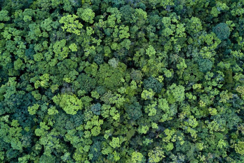les, hory