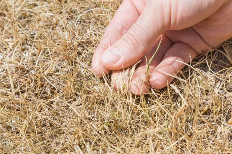 Suchý trávnik