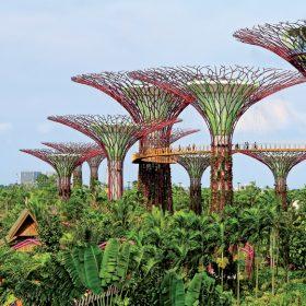 supertrees v singapure